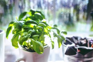 nachhaltig-ins-neue-jahr-pflanze